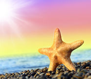 Starfish. On the beach and sea royalty free stock photo