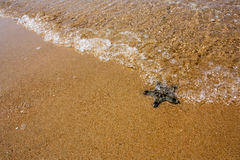Starfish on the beach, in the sea. Starfish on the beach, in the sea Stock Photos