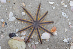 Starfish on beach Royalty Free Stock Images
