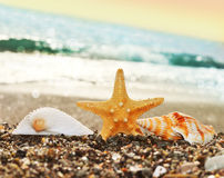 Starfish beach. Starfish and shells on the beach stock images