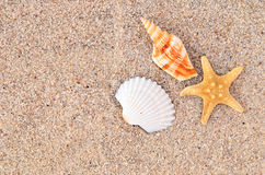 Starfish beach. Starfish and shells on the beach stock photography