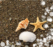 Starfish beach. Starfish and shells on the beach royalty free stock photo