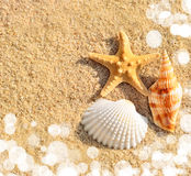 Starfish beach. Starfish and shells on the beach stock photos