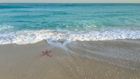 Starfish and the beach Royalty Free Stock Photography