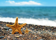 Starfish. On the beach in summer stock photos