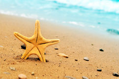 Starfish. On the beach in summer royalty free stock images