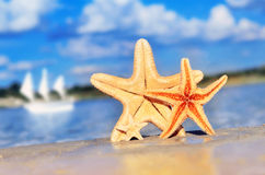 Starfish. On the beach in summer royalty free stock photography