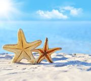 Starfish. On the beach in summer stock photography