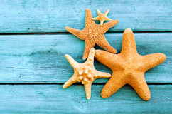 Starfish. On the beach in summer stock photo