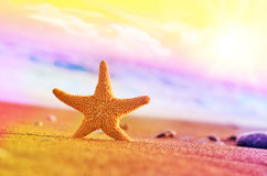 Starfish on the beach.Summer beach. Starfish on the seashore and summer beach royalty free stock images