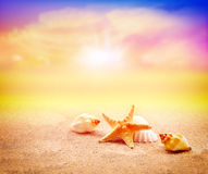 Starfish on the beach.Summer beach. Starfish on the seashore and summer beach stock images