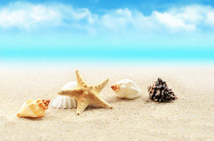 Starfish on the beach.Summer beach. Starfish on the seashore and summer beach stock photography