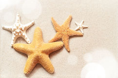 Starfish on the beach.Summer beach. Starfish on the seashore and summer beach royalty free stock photo