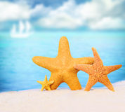Starfish on the beach. Summer beach. Starfish on the seashore and summer beach stock photo