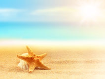 Starfish on the beach. Summer time Royalty Free Stock Image