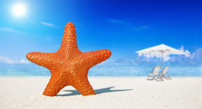 Starfish Beach Summer Vacation Concept Royalty Free Stock Image