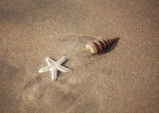 Starfish on the beach Royalty Free Stock Photo