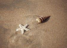 Starfish on the beach Royalty Free Stock Photo