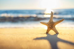 Starfish on the beach at sunrise Royalty Free Stock Photos