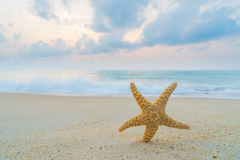 Starfish at the beach at sunrise Stock Images