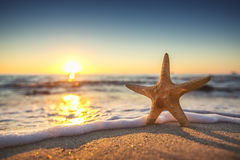 Starfish on the beach at sunrise Stock Photos