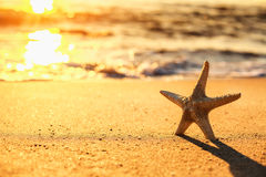 Starfish on the beach at sunrise Royalty Free Stock Image