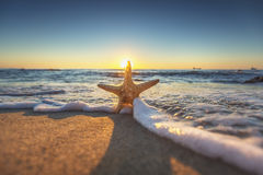 Starfish on the beach at sunrise Stock Images