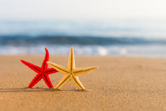 Starfish on the beach at sunrise Royalty Free Stock Images