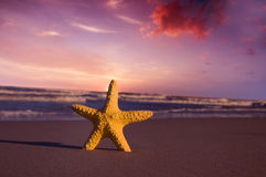 Starfish on the beach at sunset Royalty Free Stock Photo