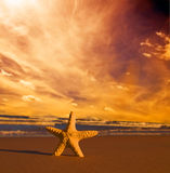 Starfish on the beach at sunset Royalty Free Stock Image