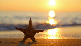 Starfish stock footage