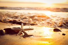 Starfish on the beach at sunset. Sun shining on the sea Royalty Free Stock Photos