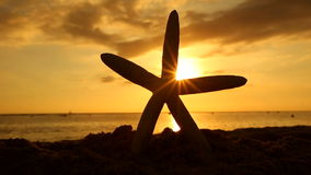 Starfish on the beach at sunset travel vacations concept stock video footage