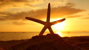 Starfish on the beach at sunset travel vacations concept. Summer vacations - Sea Starfish on the beach at sunset, Oahu Hawaii stock video