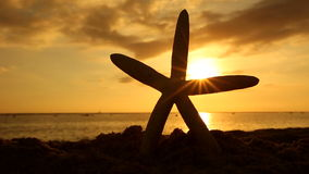 Starfish on the beach at sunset travel vacations concept. Summer vacations - Sea Starfish on the beach at sunset, Oahu Hawaii stock video footage