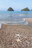 Starfish on the beach. Stock Photo