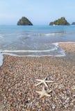Starfish on the beach. Stock Photo