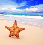 Starfish on the beach. Stock Images