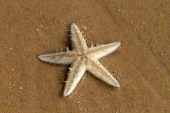 Starfish. On the beach, Vietnam royalty free stock image