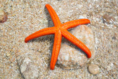 Starfish on a beach Royalty Free Stock Photo