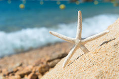 Starfish at the beach Royalty Free Stock Photography