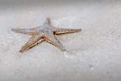 Starfish on a beach with white sand Royalty Free Stock Photos