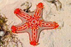 Starfish. On the beach of Zanzibar island Royalty Free Stock Image