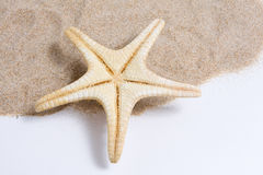 Starfish beautiful Royalty Free Stock Images