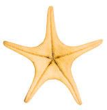Starfish Stock Image