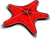 Starfish. Beautiful red starfish swimming in the ocean Royalty Free Stock Photos
