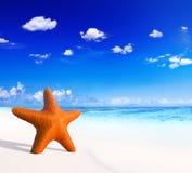 Starfish on Beautiful Tropical Beach Stock Photos