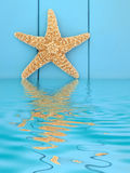 Starfish Beauty Stock Photography