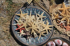 Starfish - Behramkale, Assos, Aegean villages. Images of Agean Area, Turkey Stock Image