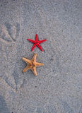 Starfish and bird traces of the sand Royalty Free Stock Photos